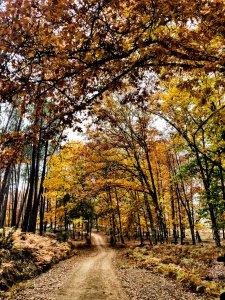 Trilho de Outono